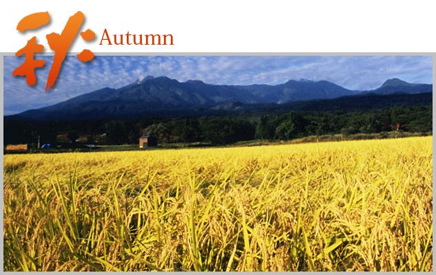 nakago_autumn